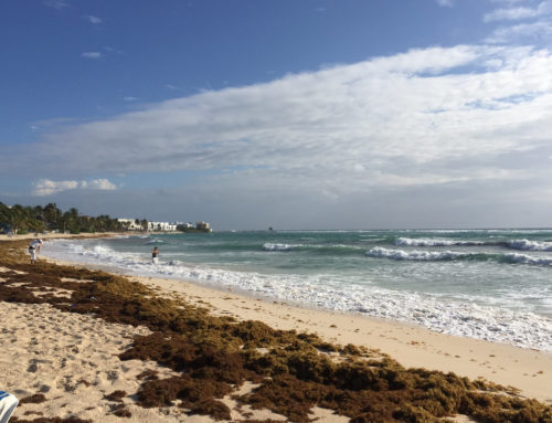 Why We Must Tackle Our Sargassum Issue