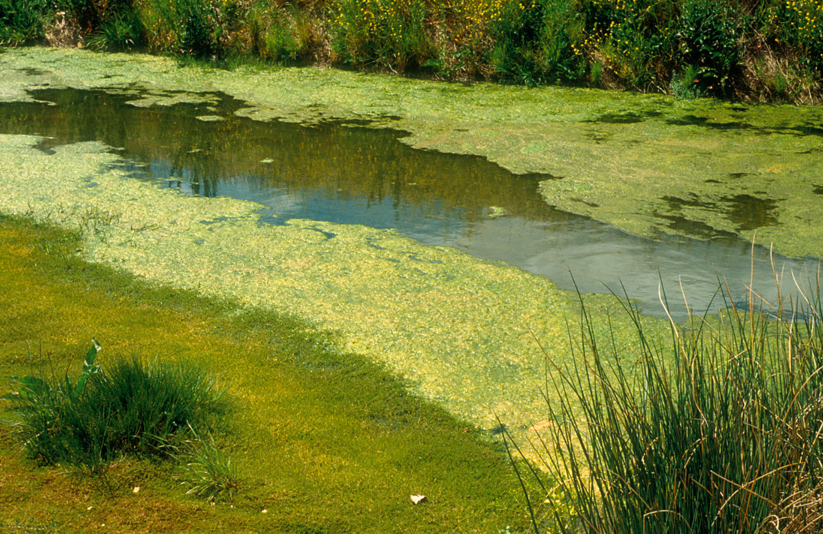 Natural water body with algae