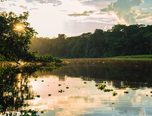 Why the Amazon region is emitting more CO2 than it absorbs